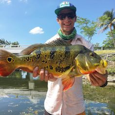 Miami trip was more than successful! Caught this 6lb peacock to end this epic day! #canalfishing #miamifishing #miami #freshwaterfishing #peacockbass #pea #midascichlid #tilapia #largemouth #cichlids #bass #soflo #captainshane #gheenoe #1stpersonfishing #canal #lunker #exotics #reeltime