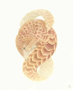 Pangolin sketch inspiration for animal collage thigh piece