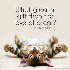 What greater gift than the love of a cat? — Charles Dickens #quote #bh #ad *So true. Love.