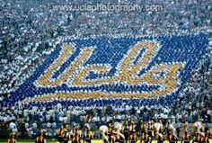 UCLA Card Stunt