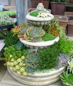 Succulent Fountain, I've seen this using one bird bath, never tiered like this.