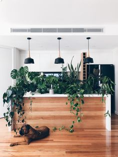 Charming Hanging Plants ideas to Brighten Your Patio – Page 6120564668 – Gardening Decor Hanging Plants Outdoor, Hanging Planters, Indoor Plants, Porch Plants, Plant Wall, Plant Decor, Dry Plants, Potted Plants, Monstera Deliciosa