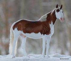 Unusual markings on this beautiful horse. Snow covered ground makes his white legs and tummy look beautiful!