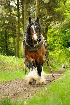 I love work horses:)