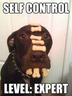 self control - level: expert