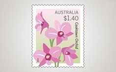 Dendrobium phalaenopsis was proclaimed the floral emblem of Queensland in 1959. http://auspo.st/1qfq0n4