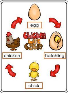 LIFE CYCLE OF A CHICKEN - TeachersPayTeachers.com