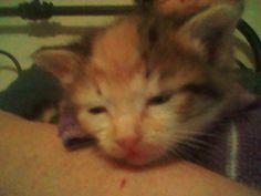 Olive getting sleepy.