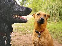 Doggy daycare Coquitlam, dog boarding Port Coquitlam