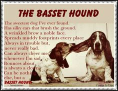 This is the gospel truth about my Basset hound, Bentley!