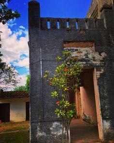 Flor de dura . Asunción-Paraguay