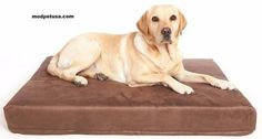 Therapeutic Memory Foam Dog Bed Chocolate Brown ** See this great product. (This is an affiliate link) #DogsBeds