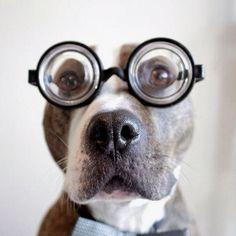 nerdy pup