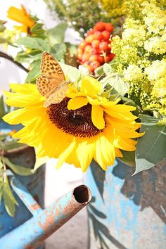 sunflower with visiter