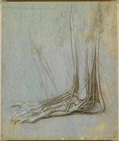 Çalışmalar yalnızca insan anatomisini kapsamıyordu. Aşağıda bir ayı ayağı tasviri görmektesiniz.