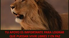 Argentina. Application of public land for the realisation of a sanctuary for seized circus animals and private zoo animals. Petition · Solicitud de tierras fiscales para la realización de un SANTUARIO QUE ALBERGUE ANIMALES DECOMISADOS DE CIRCOS Y ZOOLÓGICOS PRIVADOS · Change.org