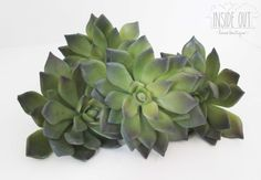 Small Succulents - Inside Out Home Boutique - Please check stock availability