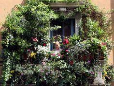 Come arredare un terrazzo con le piante? Chi dispone di una casa con terrazzo aspetta con impazienza la bella stagione per viverlo e rinnovarlo con piante gradevoli alla vista ma anche funzionali.