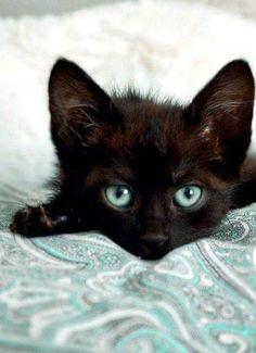 Look at those eyes.