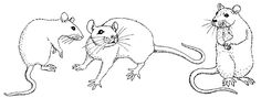 rat Drawings in Pencil | of rat fantasies and scenes from rat life rats in space sample art ...