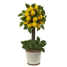 Found it at Wayfair - Lemon Ball Round Topiary Arrangement in Decorative Pot
