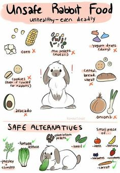 Which foods are safe and not safe for bunnies? #bunny #bunnies #rabbit #rabbits #cuteanimals #pets #pet #infograph