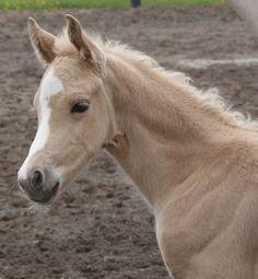 Blazing Colours Farm's Foals
