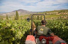 Gaia Wines, Greece, Vineyard
