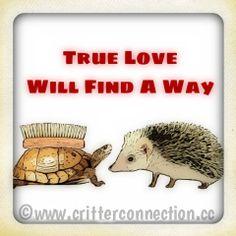#hedgehog #hedgie #funny #lol #quills #turtle #cute #adorable #love Funny Animals, Cute Animals, Baby Hedgehog, Narwhals, Spike Lee, Tasmanian Devil, Sloths, Alpacas, True Love