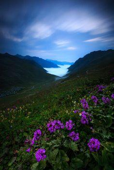 Sunrise Wallpaper, Flower Landscape, Purple Tulips, Mother Nature, Wild Flowers, Beautiful Pictures, Scenery, Explore, Amazing Nature