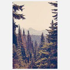 Mountains Through The Trees, by Kurt Rahn