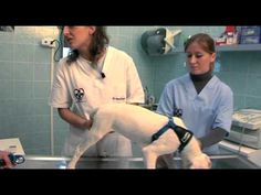 Appena comprato un cane è importante portarlo dal veterinario. Scoprite perchè