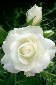 Happy Wedding Anniversary Mum, I Love You 14/2/18