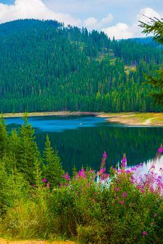 Vidra Lake - Vidra Lake