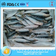 Frozen Whole Scad Mackerel fish/yellow stripe scad for you