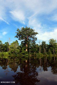 Peat forest in Borneo, Indonesia