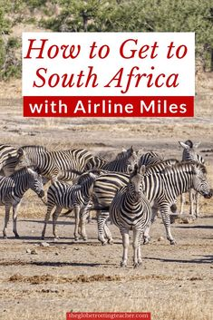 Wondering how to get to South Africa with points & miles for a safari? Use this guide to learn how to fly to South Africa using your miles & points. South Africa Safari, Visit South Africa, Book Cheap Hotels, Best Travel Credit Cards, Road Trip Usa, Free Travel, Africa Travel, Travel Hacks, Travel Tips