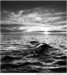 The final of my posts of Sebatiao Salgado for today. He really has the magic touch.