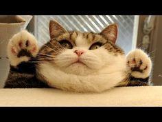 The Surprising Reason Humans Love Cat Videos