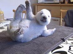 O filhote de urso polar foi adotado por um zoológico na Dinamarca depois que a sua mãe parou de produzir suficiente leite para amamentá-lo  Foto: BBC Brasil