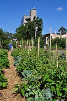 Farming on a parking lot ...create an economically viable series of urban micro-farms using under-utilized and non-traditional pieces of land (ie.. a parking lot!), and transforming them into verdant and bountiful growing spaces that feed & nourish the surrounding community.