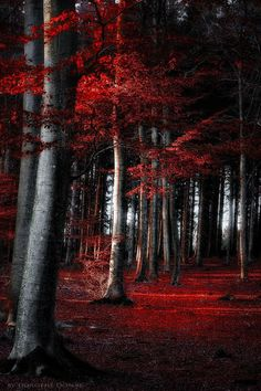 """crescentmoon06: """" red forest by dorothedomke """""""