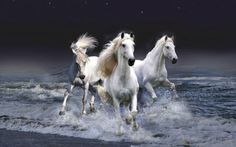 A beautiful picture of Mystic #Horses And The #Sea downloaded from http://alliswall.com
