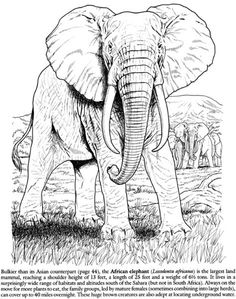 Elephant Photo:  This Photo was uploaded by tharens. Find other Elephant pictures and photos or upload your own with Photobucket free image and video hos...
