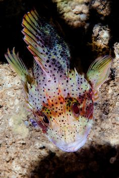 Scorp1 by Benthichi, via Flickr