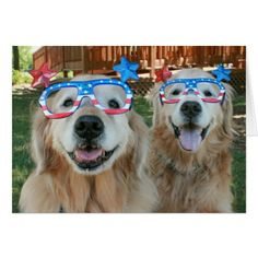 #Golden Retriever Dogs in  Independence Day Glasses Card - #4thofjuly #patriotic #patriot Independence Day Fourth of July July Fourth waving the flag
