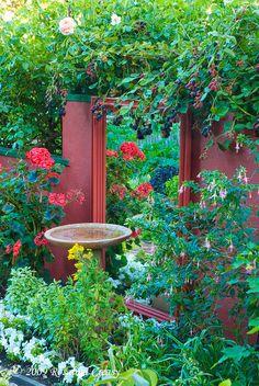 Garden mirror wall reflects bird bath, roses, basil, blackberries, fuchsia...