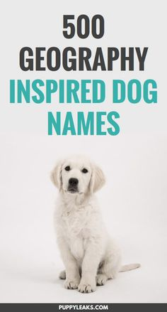 If you're looking for a geography themed name for your new dog you've come to the right place. From world capitals like Oslo to the Hari river, there's a lot of cool names to choose from. Here's 500 geography inspired dog names. Puppy Training Tips, Training Your Dog, Potty Training, Oslo, Best Dog Names, Girl Puppy Names Unique, Cool Pet Names, Cute Puppy Names, Cat Names