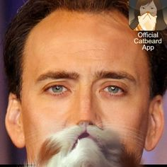 Nicolas Cage with a Catbeard!  Make you own Celebrity Catbeards!  Download the Official Catbeard App here: https://itunes.apple.com/WebObjects/MZStore.woa/wa/viewSoftware?id=658483064=8