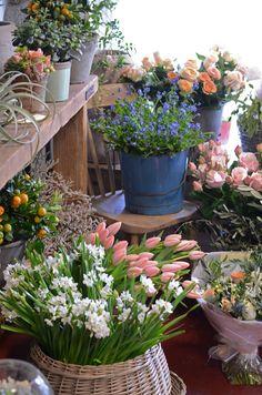 Dublin Flower Shops / Les Fleurs